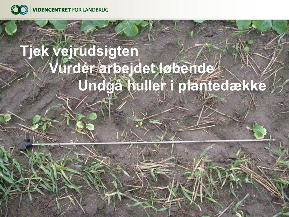 Vurdér arbejdet løbende Undgå huller i plantedække