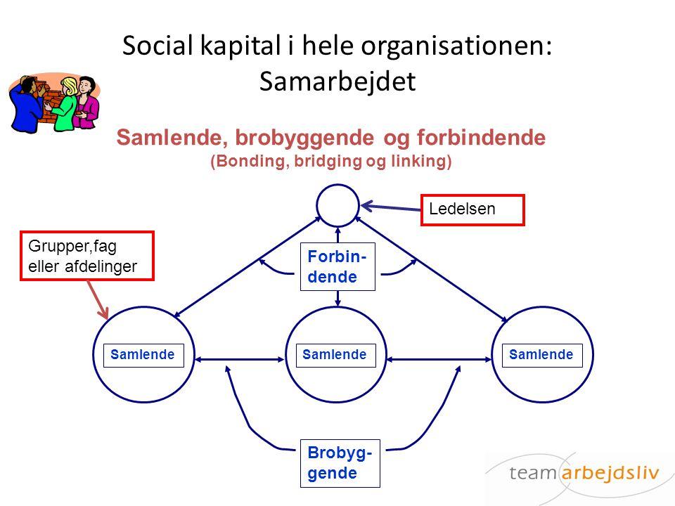 Social kapital i hele organisationen: Samarbejdet