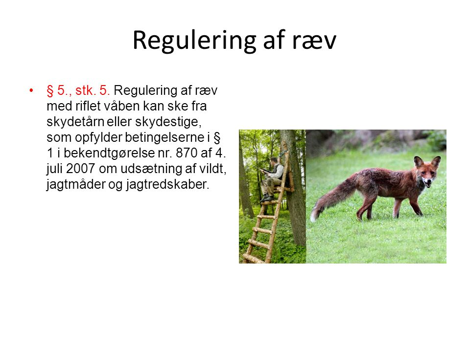 Regulering af ræv