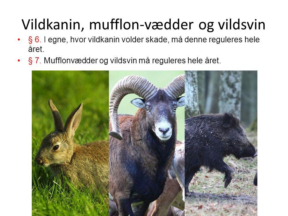 Vildkanin, mufflon-vædder og vildsvin