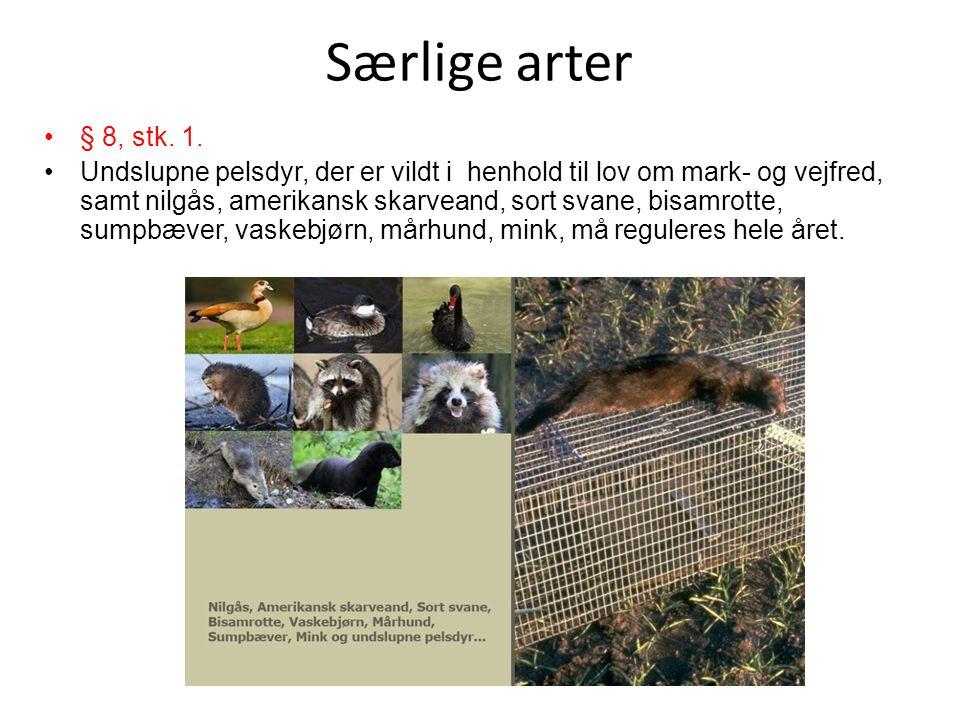 Særlige arter § 8, stk. 1.