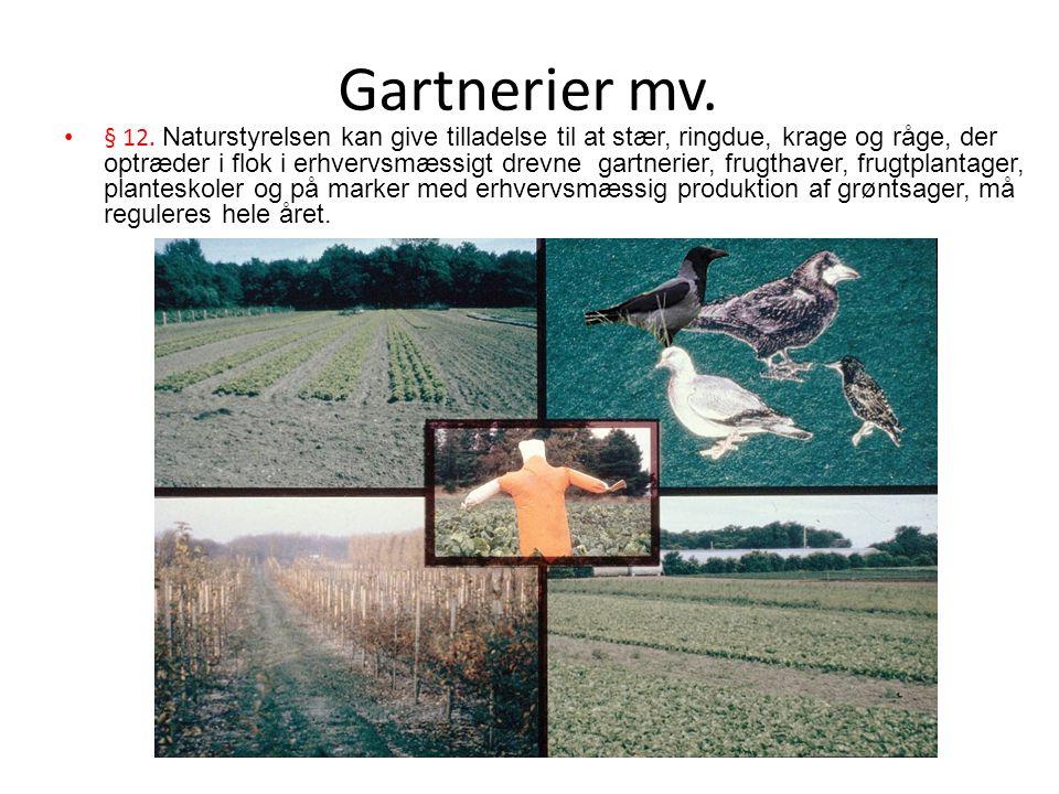 Gartnerier mv.