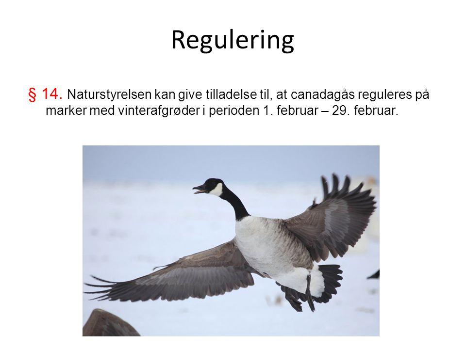 Regulering § 14.