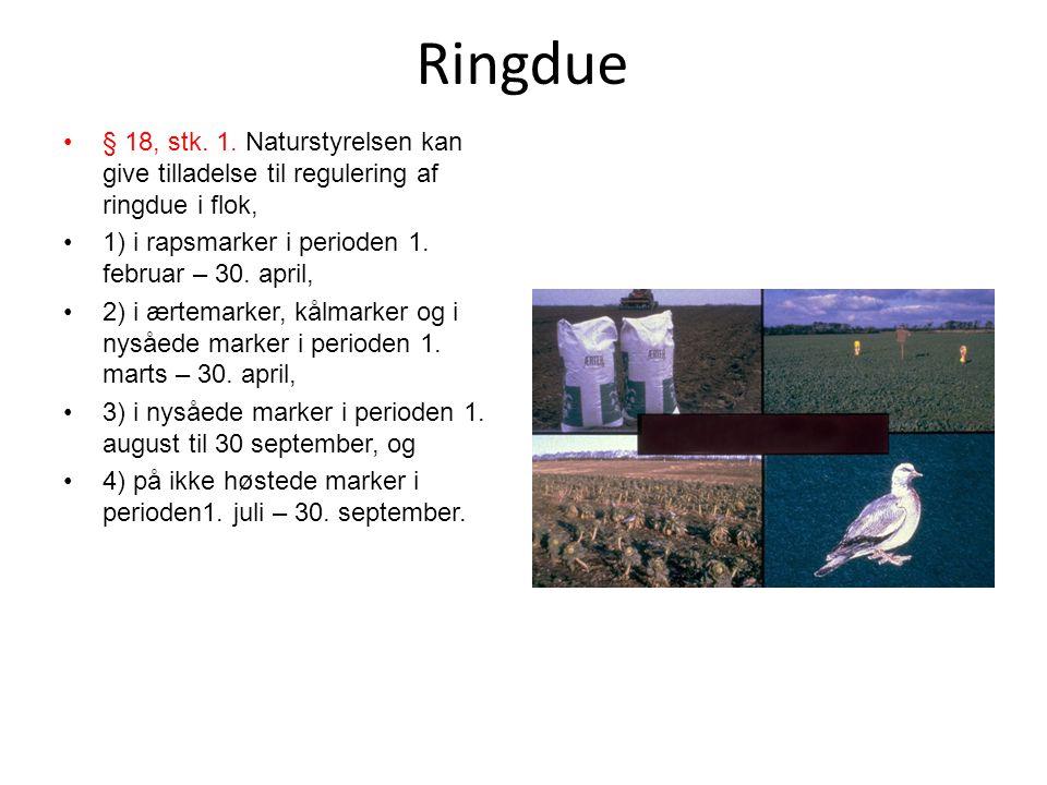 Ringdue § 18, stk. 1. Naturstyrelsen kan give tilladelse til regulering af ringdue i flok, 1) i rapsmarker i perioden 1. februar – 30. april,