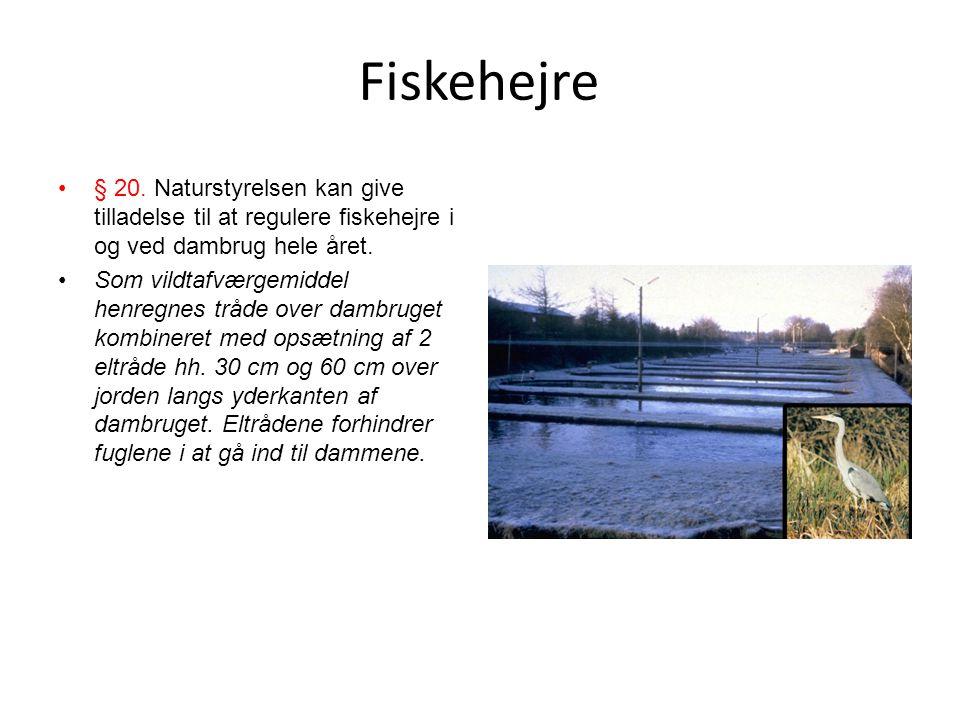Fiskehejre § 20. Naturstyrelsen kan give tilladelse til at regulere fiskehejre i og ved dambrug hele året.