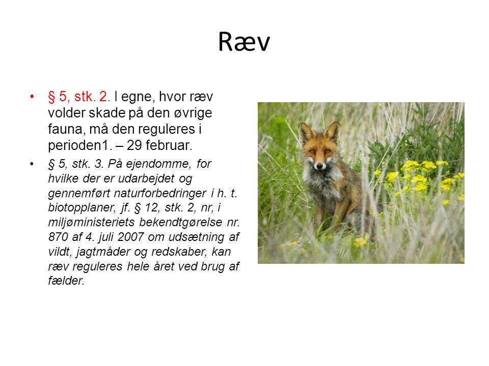 Ræv § 5, stk. 2. I egne, hvor ræv volder skade på den øvrige fauna, må den reguleres i perioden1. – 29 februar.