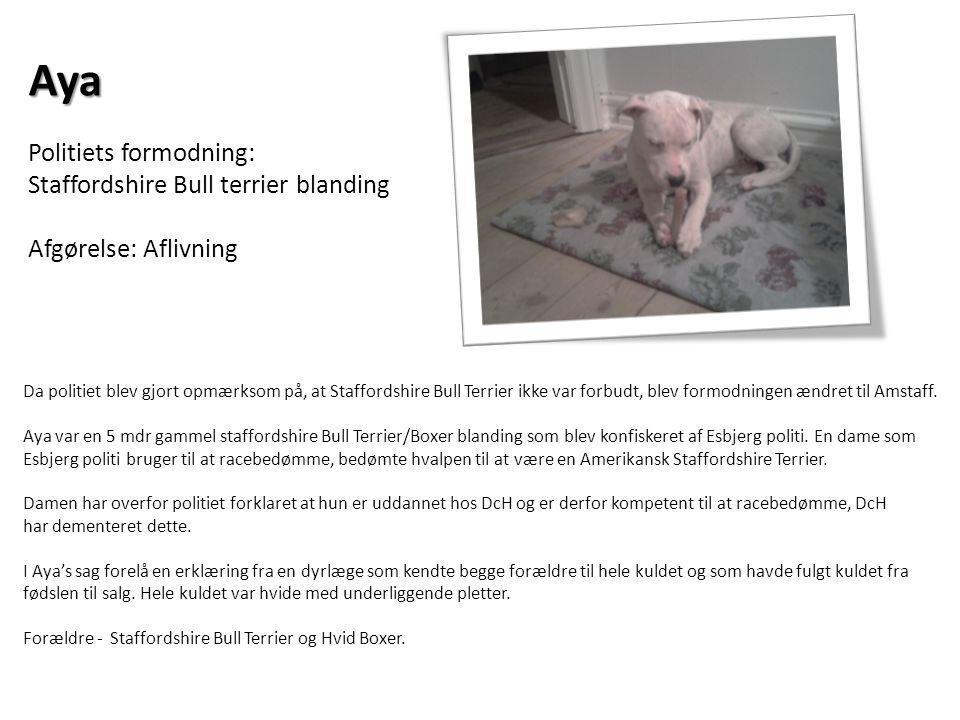 Aya Politiets formodning: Staffordshire Bull terrier blanding