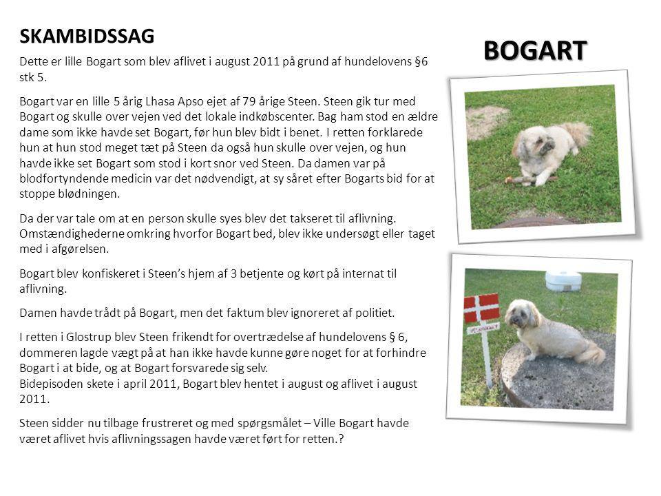 SKAMBIDSSAG BOGART. Dette er lille Bogart som blev aflivet i august 2011 på grund af hundelovens §6 stk 5.