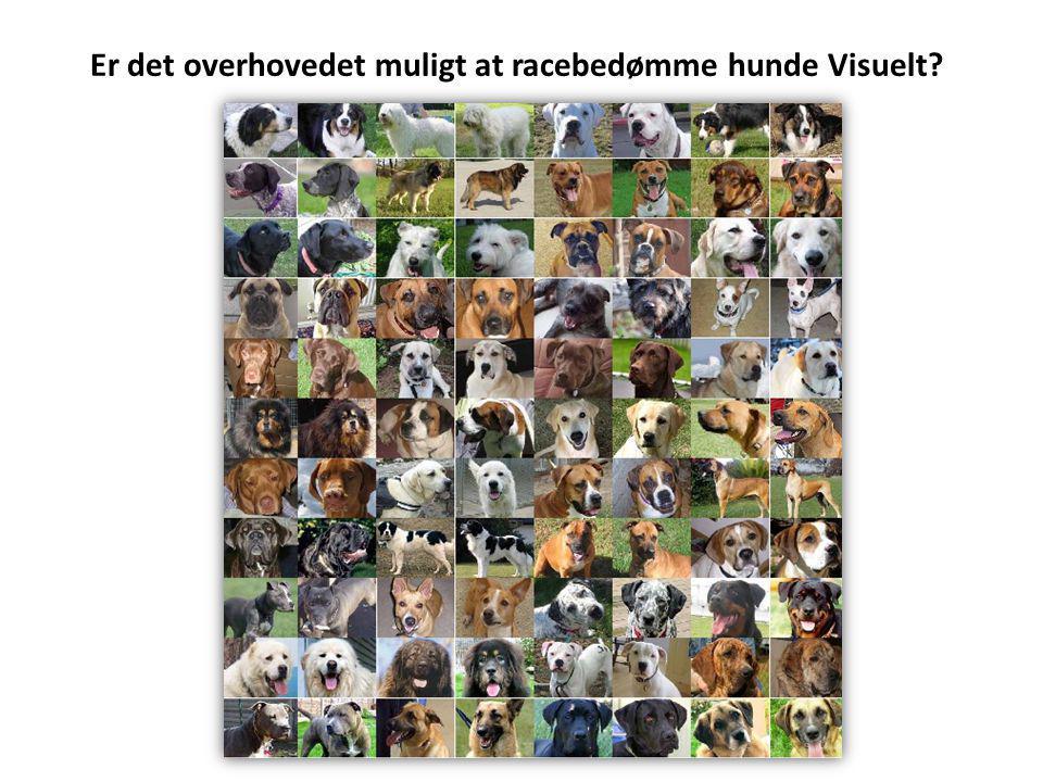 Er det overhovedet muligt at racebedømme hunde Visuelt