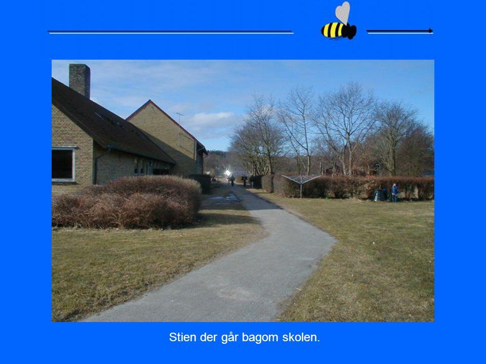 Stien der går bagom skolen.