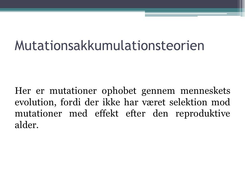 Mutationsakkumulationsteorien