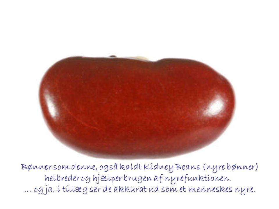 Bønner som denne, også kaldt Kidney Beans (nyre bønner)