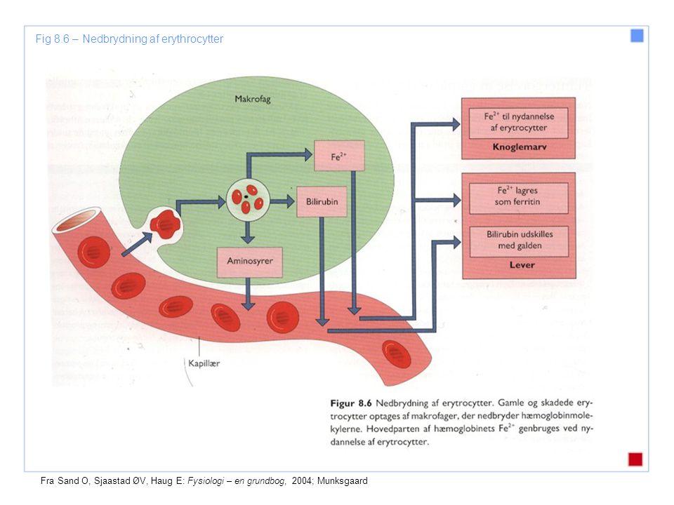 Fig 8.6 – Nedbrydning af erythrocytter