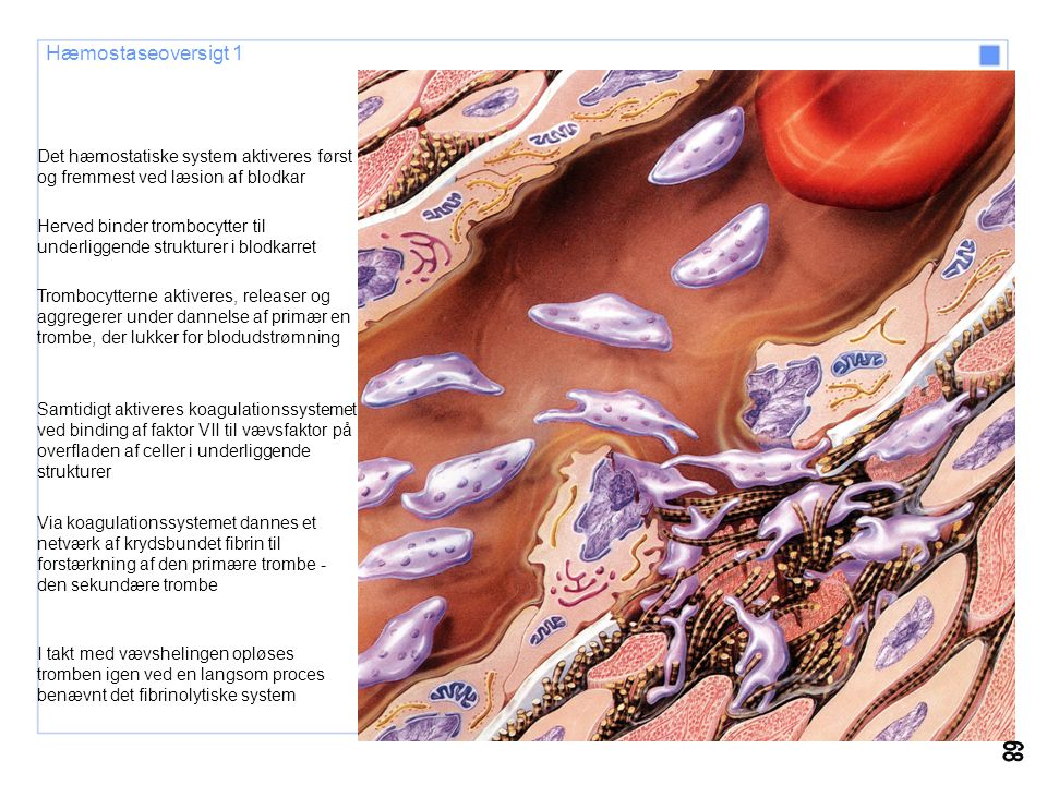 Hæmostaseoversigt 1 Det hæmostatiske system aktiveres først og fremmest ved læsion af blodkar.