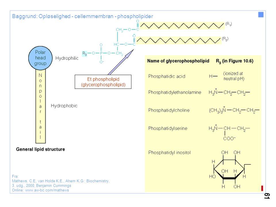 Et phospholipid (glycerophospholipid)