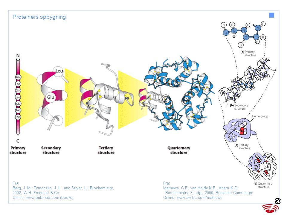 Proteiners opbygning Fra: Mathews, C.E, van Holde K.E., Ahern K.G. : Biochemistry, 3. udg., 2000, Benjamin Cummings Online: www.aw-bc.com/mathews.