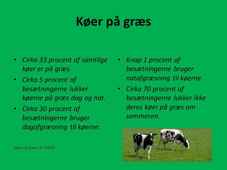 Køer på græs Cirka 33 procent af samtlige køer er på græs.