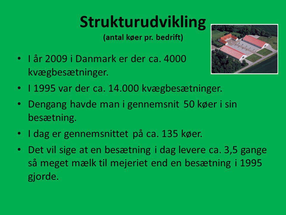 Strukturudvikling (antal køer pr. bedrift)
