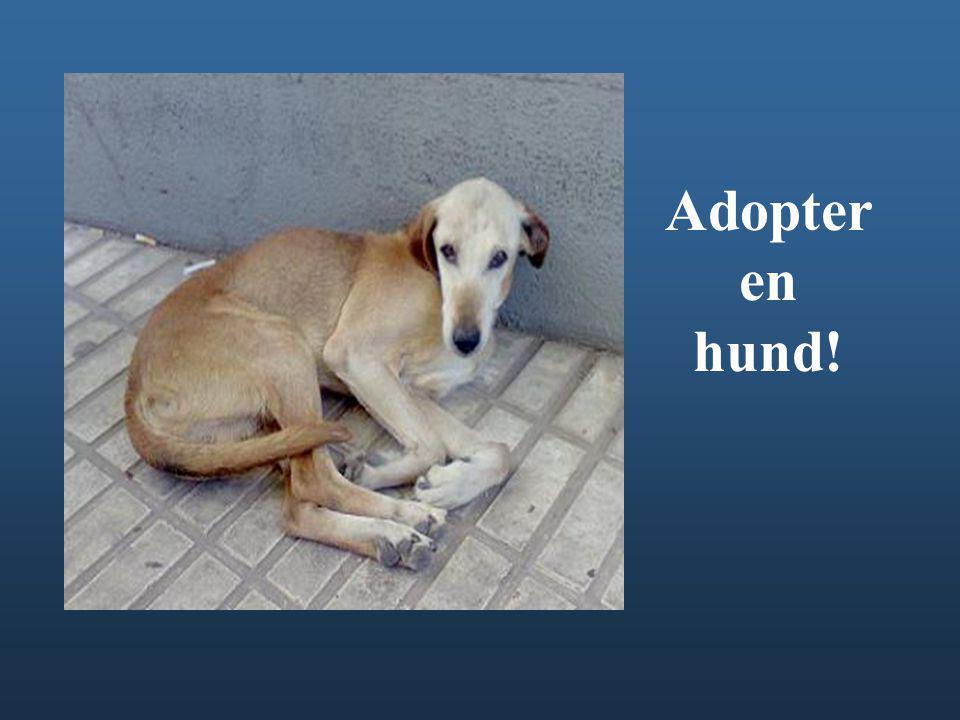 Adopter en hund!