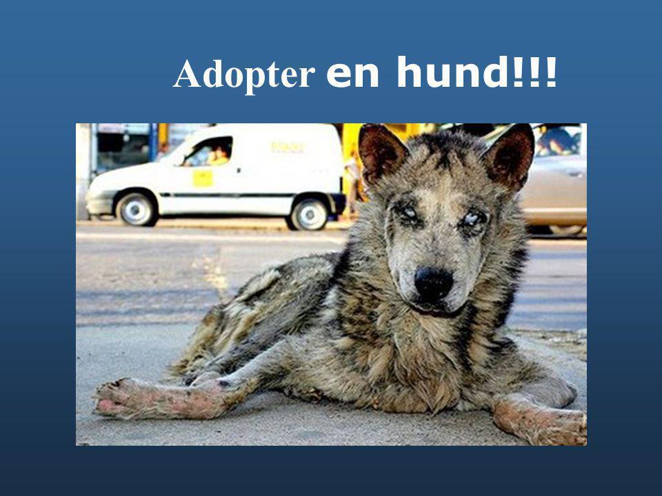 Adopter en hund!!!