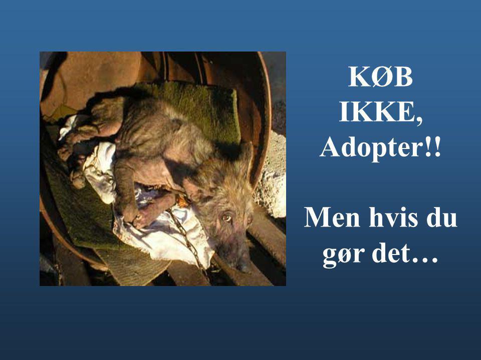 KØB IKKE, Adopter!! Men hvis du gør det…