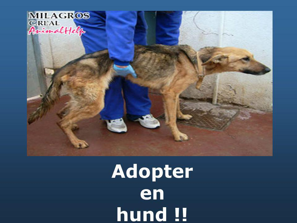 Adopter en hund !!
