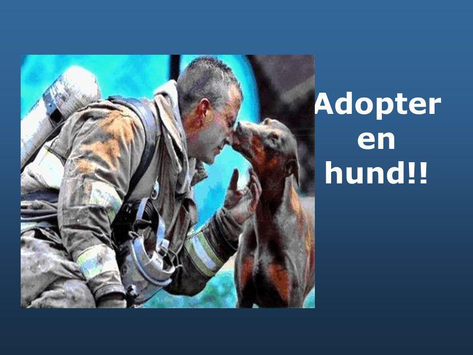 Adopter en hund!!