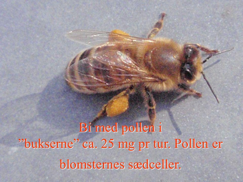 bukserne ca. 25 mg pr tur. Pollen er blomsternes sædceller.