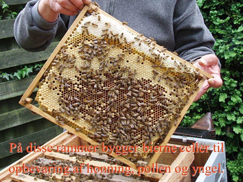 Rammer På disse rammer bygger bierne celler til opbevaring af honning, pollen og yngel.