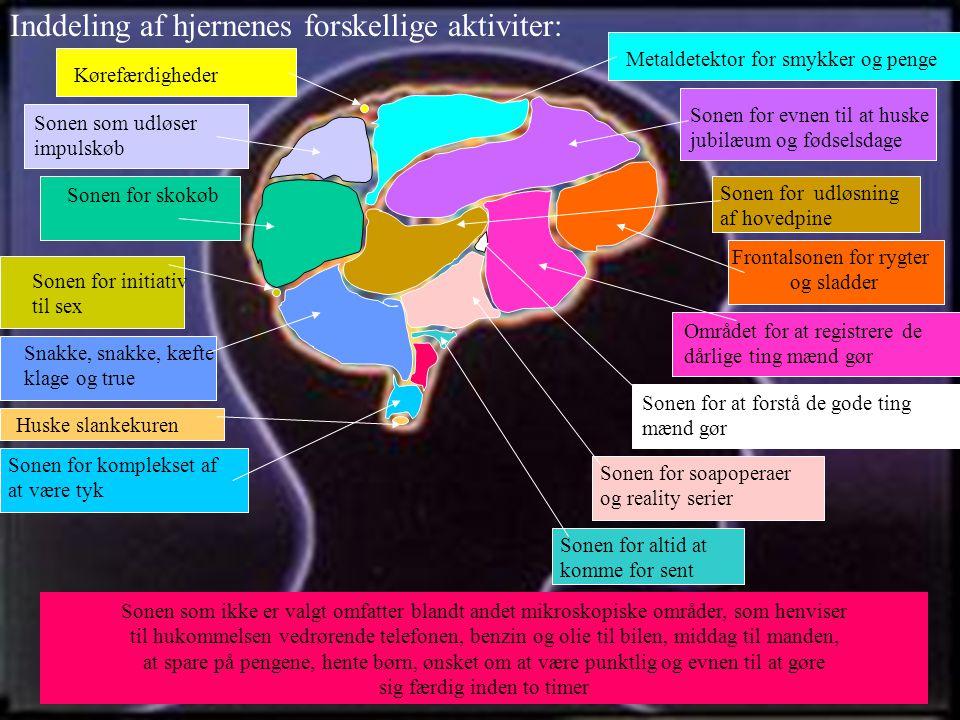 Inddeling af hjernenes forskellige aktiviter: