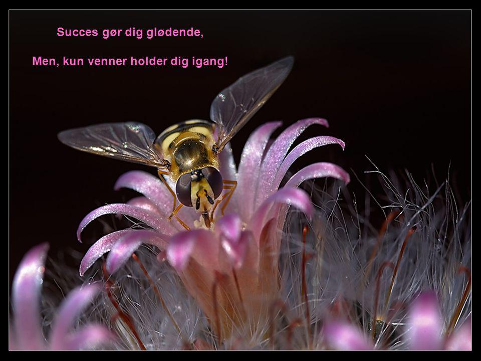 Succes gør dig glødende, Men, kun venner holder dig igang!