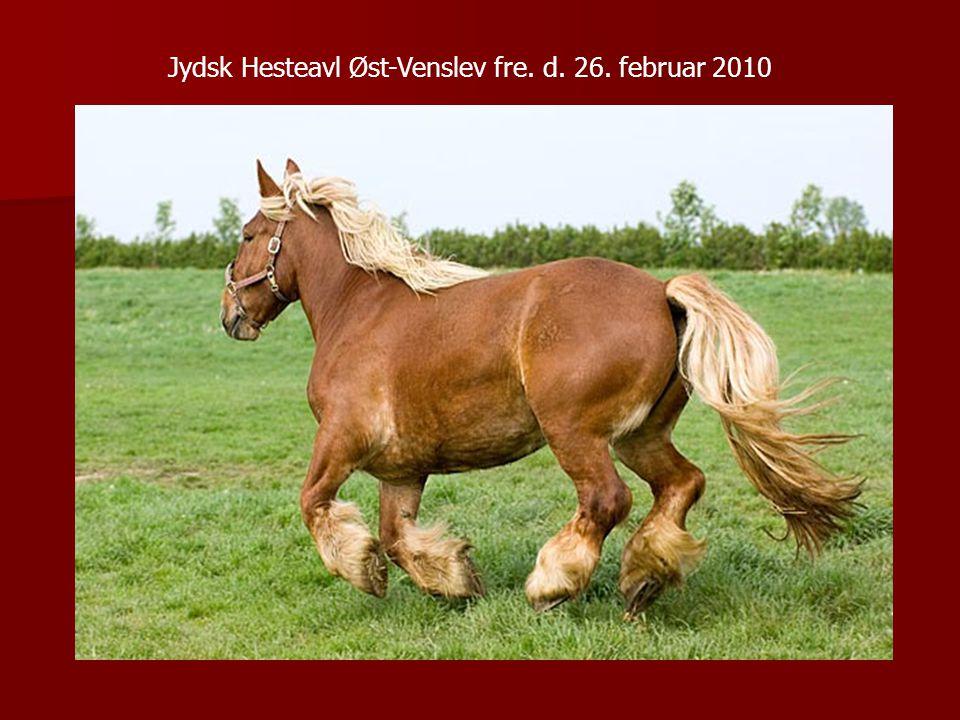 Jydsk Hesteavl Øst-Venslev fre. d. 26. februar 2010