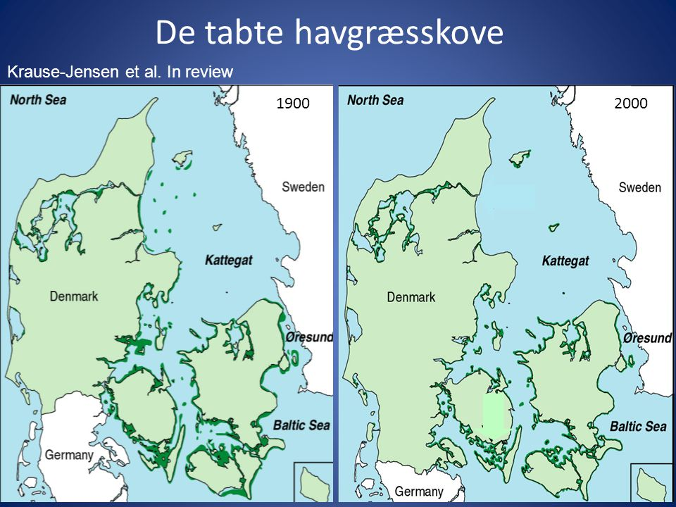 De tabte havgræsskove Krause-Jensen et al. In review 1900 2000