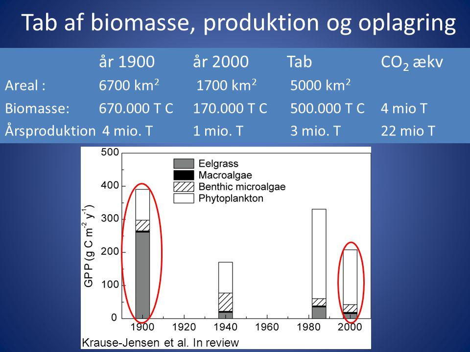Tab af biomasse, produktion og oplagring