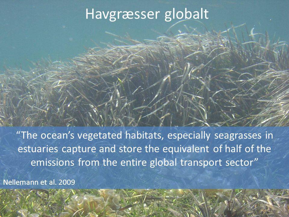 Havgræsser globalt