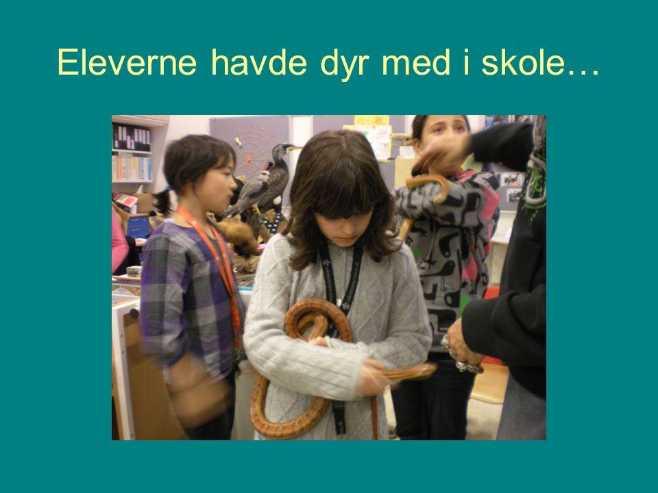 Eleverne havde dyr med i skole…