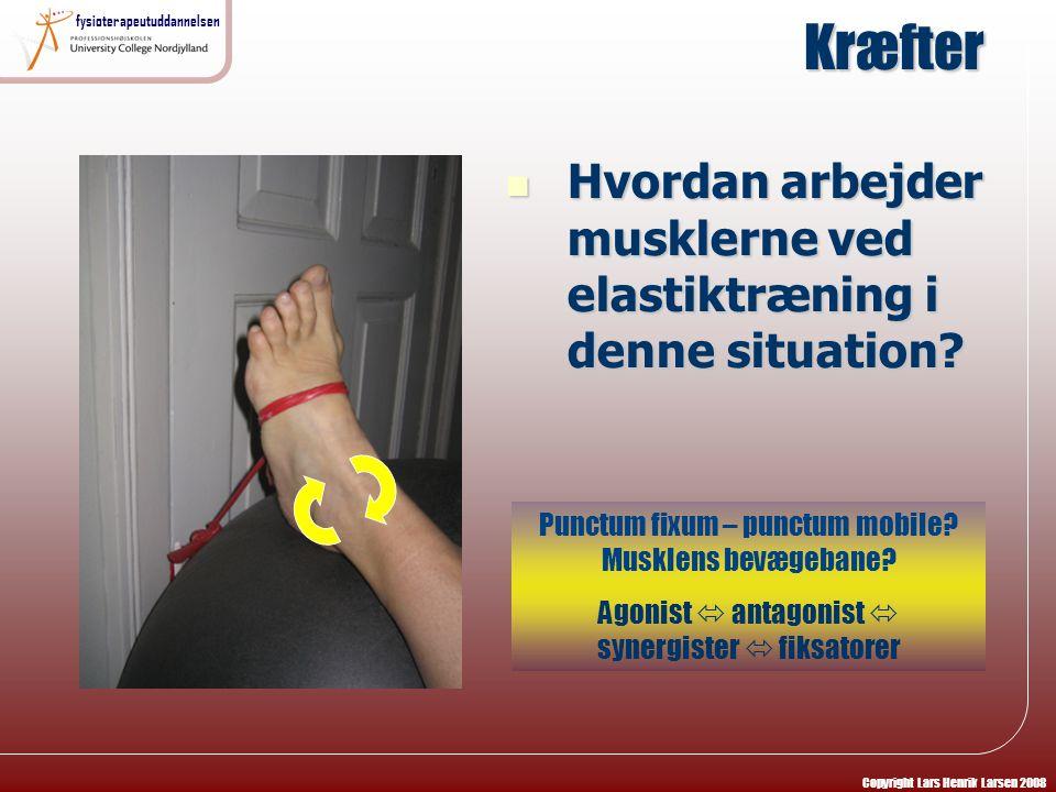 Kræfter Hvordan arbejder musklerne ved elastiktræning i denne situation Punctum fixum – punctum mobile Musklens bevægebane