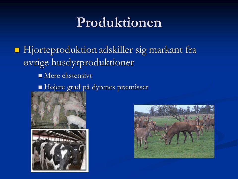 Produktionen Hjorteproduktion adskiller sig markant fra øvrige husdyrproduktioner. Mere ekstensivt.