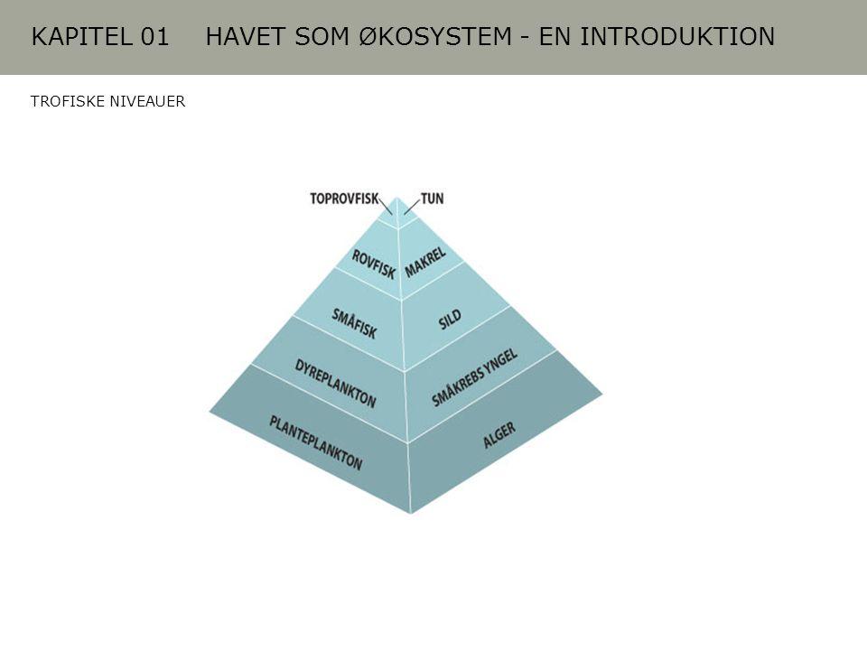 KAPITEL 01 HAVET SOM ØKOSYSTEM - EN INTRODUKTION