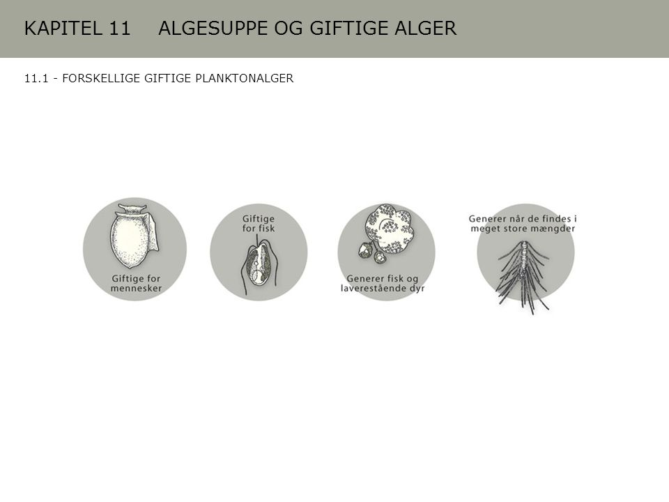 KAPITEL 11 ALGESUPPE OG GIFTIGE ALGER