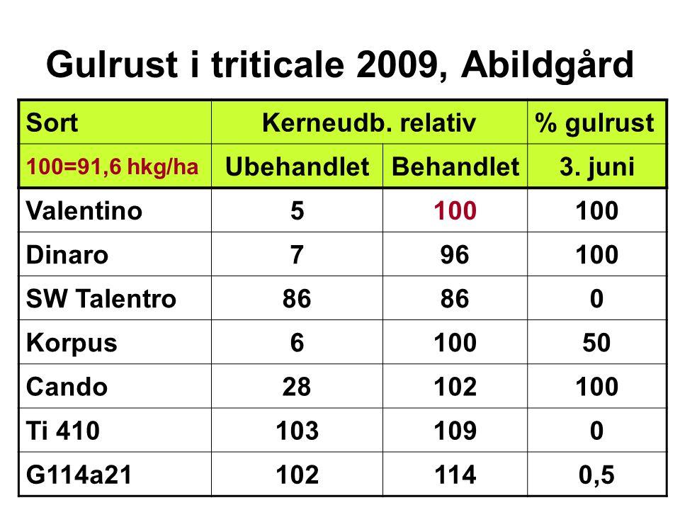 Gulrust i triticale 2009, Abildgård