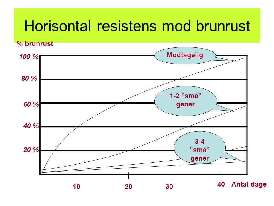 Horisontal resistens mod brunrust