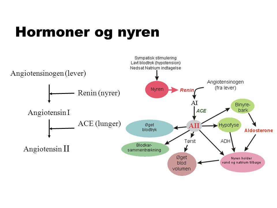 Hormoner og nyren Angiotensinogen (lever) Renin (nyrer) Angiotensin I