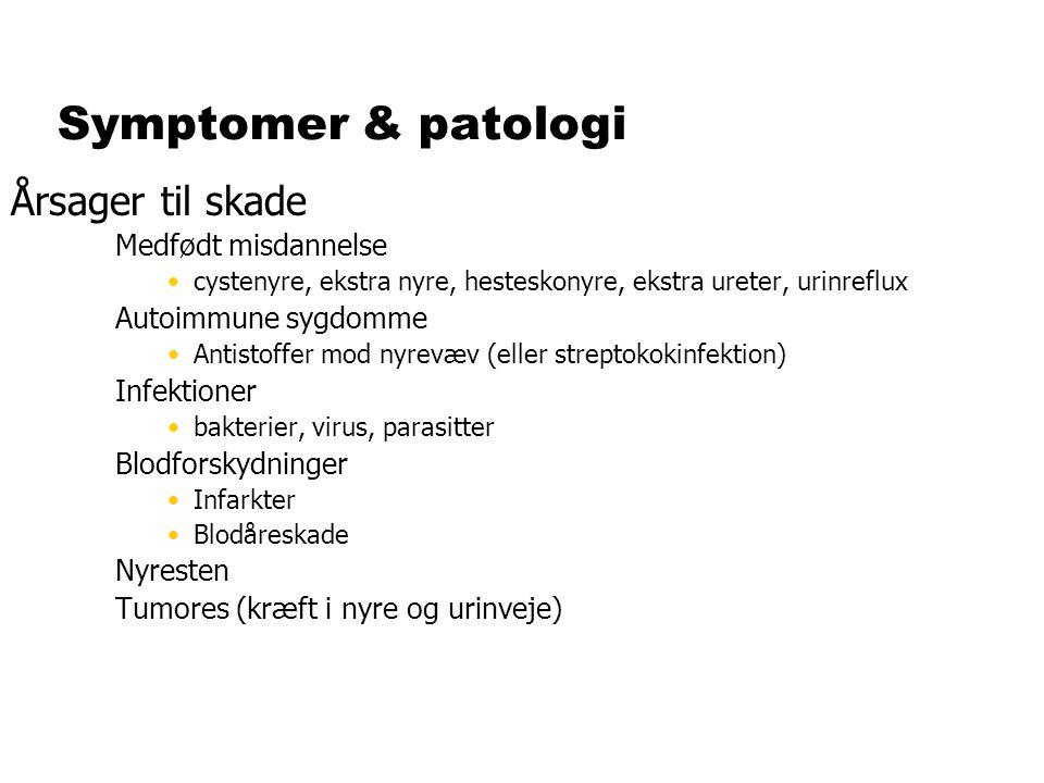 Symptomer & patologi Årsager til skade Medfødt misdannelse