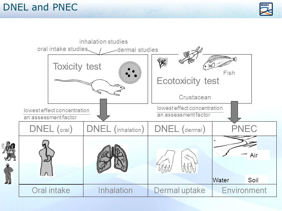 DNEL and PNEC Ecotoxicity test Toxicity test DNEL (oral)