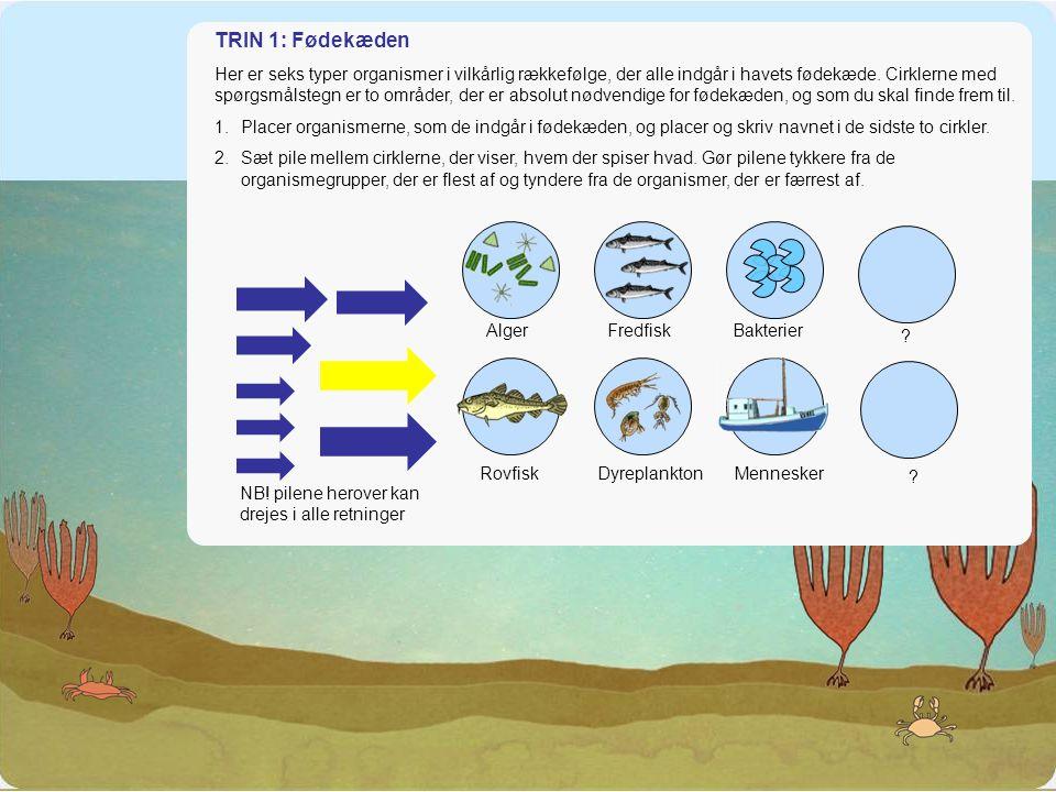 Fødekæden i havet TRIN 1: Fødekæden