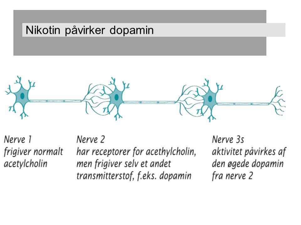 Nikotin påvirker dopamin