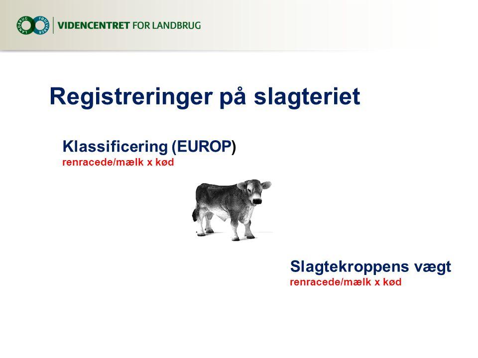 Registreringer på slagteriet