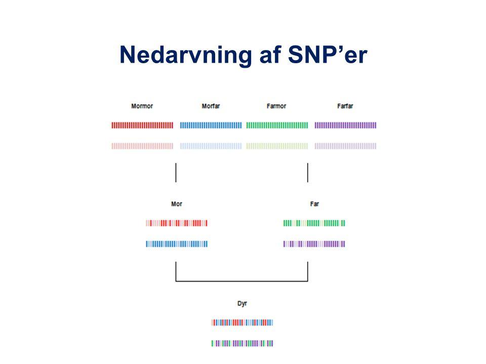 Nedarvning af SNP'er
