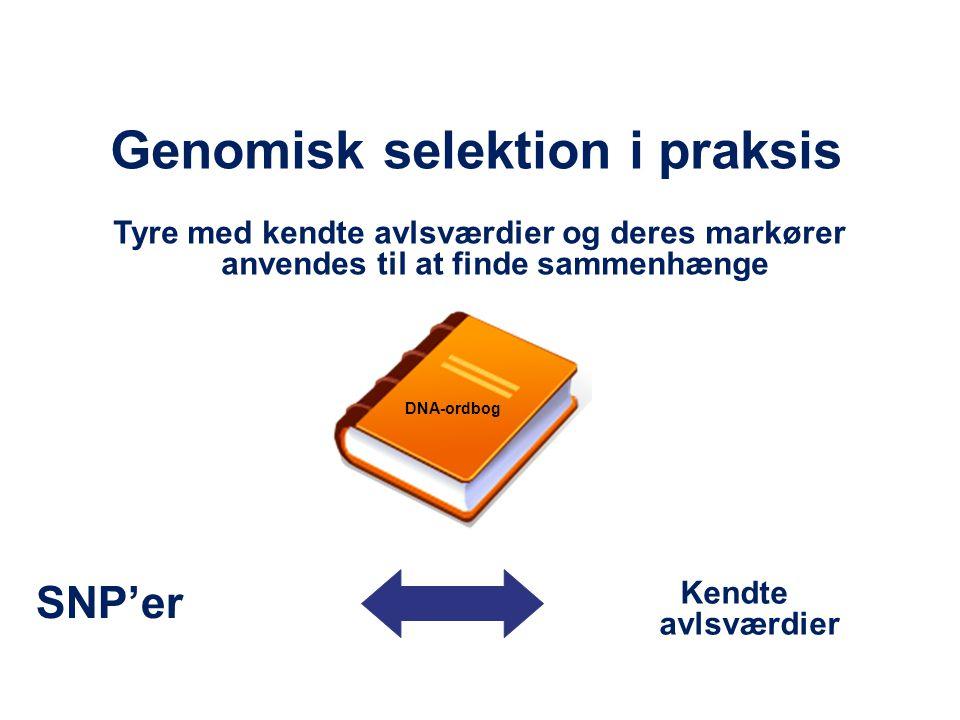 Genomisk selektion i praksis